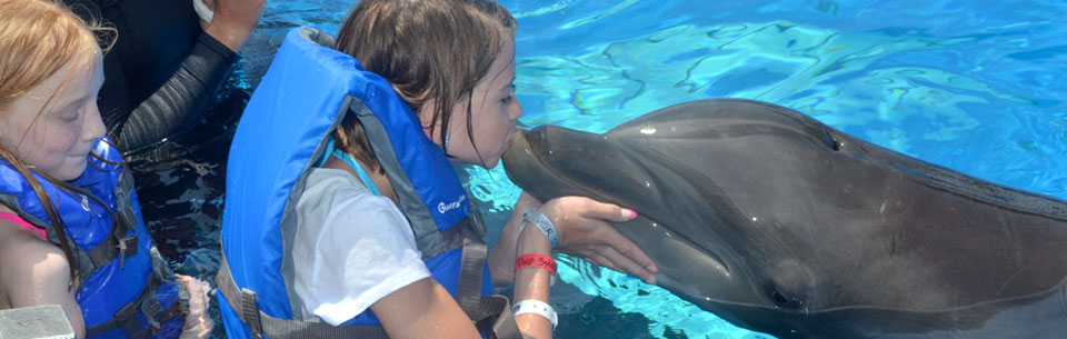 H1 Dolphin Splash Encounter H4 Enter The Dolphins World For An Unforgettable Experience As You Get Up Close And Personal With These Sleek