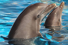 H1 Dolphin Splash Encounter H2 Faqs H3 Will I Get To Swim With The Dolphins P Partints In Stand