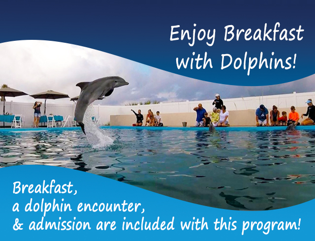Breakfast with Dolphins