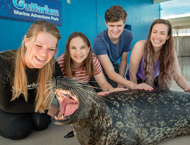 Discover Harbor Seals Encounter
