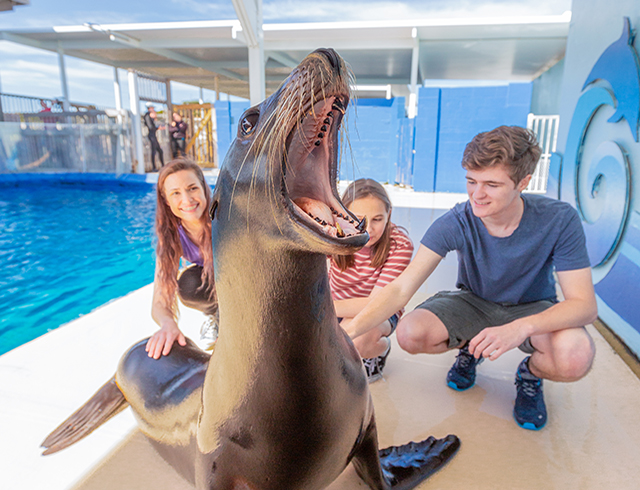 Discover Sea Lions Encounter